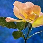 Another Beautiful Rose Art Print