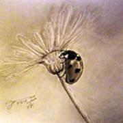 Another Ladybug Art Print