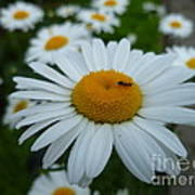 Ant Nothing Sweeter Than My Little Daisy Art Print