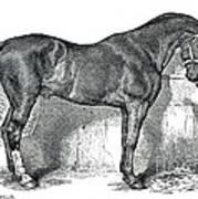 Antique Horse Drawing Art Print