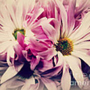 Antique Pink And White Daisies Art Print