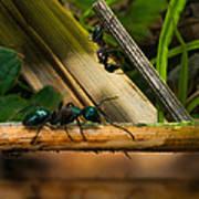 Ants Adventure 2 Art Print