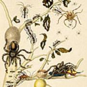 Ants Spiders Tarantula And Hummingbird Art Print