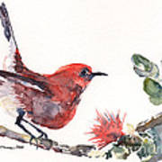 Apapane - Native Hawaiian Bird Art Print