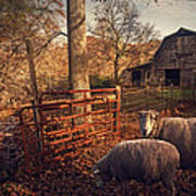 Appalachian Sheep Art Print by William Schmid