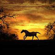 Appaloosa Sunset Art Print
