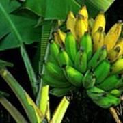 Apple Banana Art Print