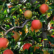 Apple Harvest - Digital Painting Art Print