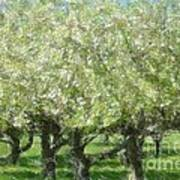 Apple Orchard Art Print