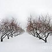 Apple Orchard Art Print by Ken Marsh