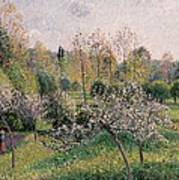 Apple Trees In Blossom Art Print