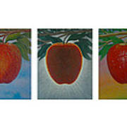 Apples Triptych Art Print by Don Young