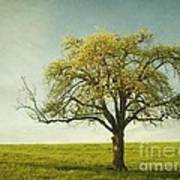 Appletree Art Print
