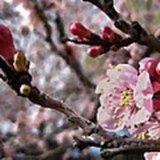 Apricot Floral Art Print