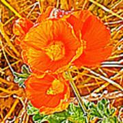 Apricot Globemallow In Vermilion Cliffs National Monument-arizona Art Print