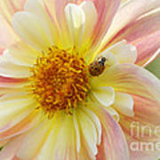 April Heather Dahlia With Ladybug Art Print