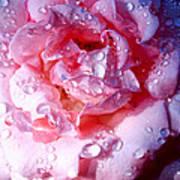 April Rose Palm Springs Art Print