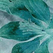 Aqualily Art Print