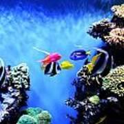 Aquarium 1 Art Print