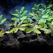 Aquatic Leaves Art Print