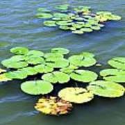 Aquatic Plants Art Print