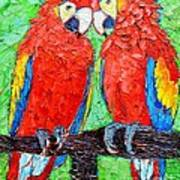 Ara Love A Moment Of Tenderness Between Two Scarlet Macaw Parrots Art Print