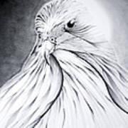 Arabian Falcon Art Print