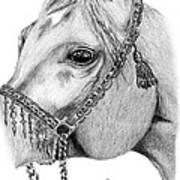 Arabian Halter Art Print