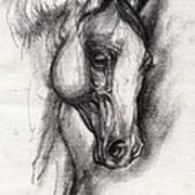 Arabian Horse Drawing 12 Art Print
