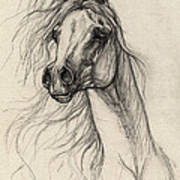 Arabian Horse Drawing 37 Art Print