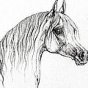 Arabian Horse Drawing 47 Art Print