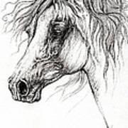 Arabian Horse Drawing 54 Art Print