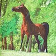 Arabian Horse In A Forest Clearing Art Print