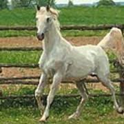 Arabian Horse Portrait In Pastels Art Print