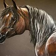 Arabian Mare Art Print