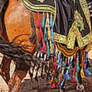 Arabian Native Show Art Print