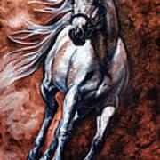 Arabian Purebred Art Print