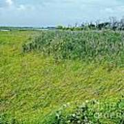 Aransas Nwr Coastal Grasses Art Print
