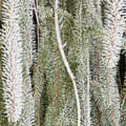 Arboretum Hoar Frost 2 Art Print