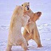 Arctic Dance Art Print