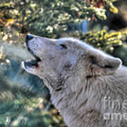 Arctic Wolf Song Art Print
