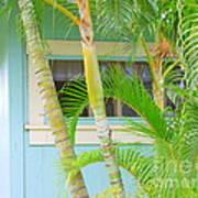 Areca Palms At The Window Art Print