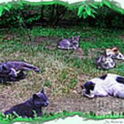 Argentina Cat Park Art Print