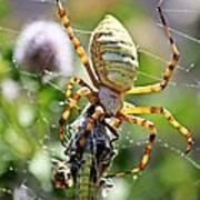 Argiope Spider And Grasshopper Vertical Art Print