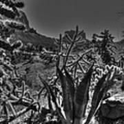 Arizona Bell Rock Valley N9 Art Print