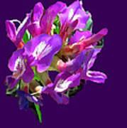 Arizona Desert Flowers Art Print