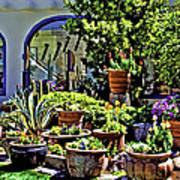 Tucson Garden Art Print