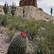 Arizona Icons Art Print
