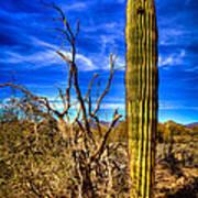 Arizona Landscape IIi Art Print