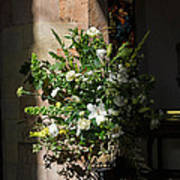 Arrangement Of White Flowers Art Print